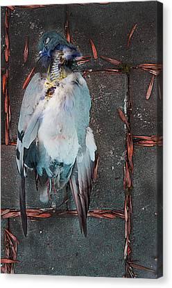 Icarus Mechanika Canvas Print