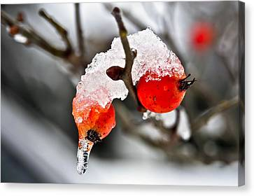 Canvas Print featuring the photograph Ice Berries by Crystal Hoeveler