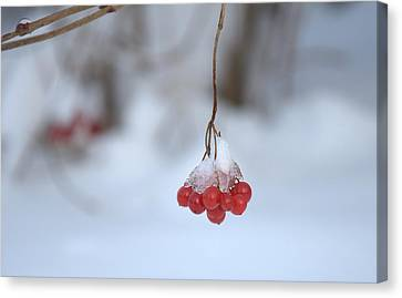 Canvas Print featuring the photograph Ice Berries by Sabine Edrissi