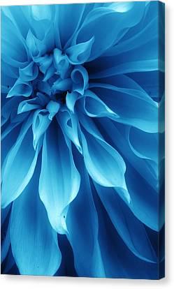 Ice Blue Dahlia Canvas Print