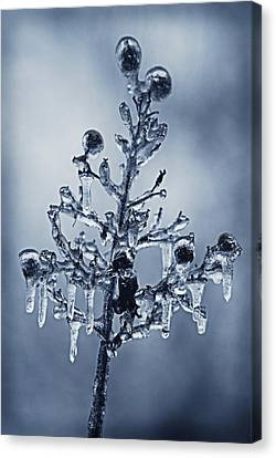 Ice Bouquet Canvas Print