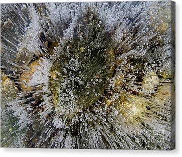 Ice Bubbles Canvas Print