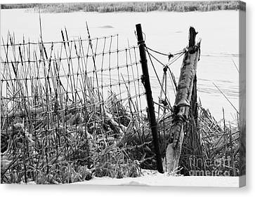 Ice Coated Wire Fence And Rushes After A Winter Storm Canvas Print by Louise Heusinkveld