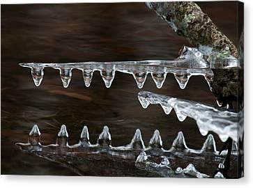 Ice Crocodiles Canvas Print by Lara Ellis