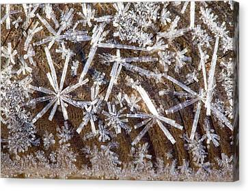 Ice Crystals Canvas Print by Ashley Cooper