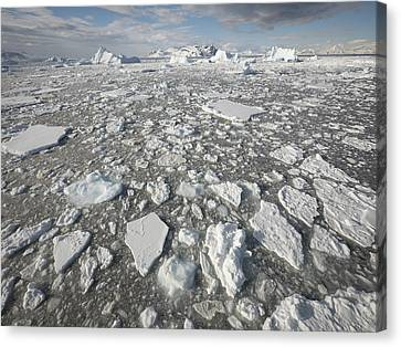 Gerry Canvas Print - Ice Floes Antarctica by Gerry Ellis