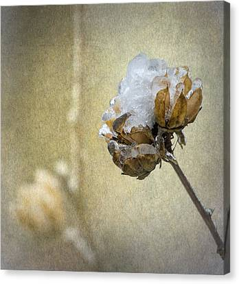 Ice Flower Canvas Print by Angie Vogel