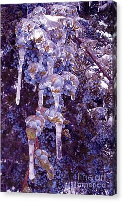Ice In Purple Canvas Print by R McLellan