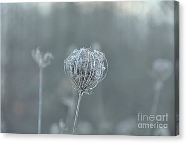 Ice Is In The Air Canvas Print