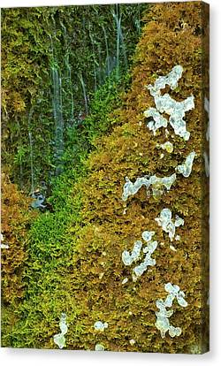 Florid Canvas Print - Ice On A Moss by Thomas Aichinger