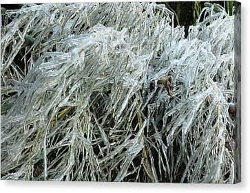 Ice On Bamboo Leaves Canvas Print by Daniel Reed