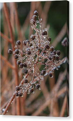 Ice On Berries Canvas Print by Patricia Schaefer