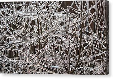 Ice Storm Canvas Print by Arlene Carmel
