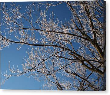 Ice Storm Branches Canvas Print