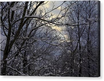 Winter's Embrace Canvas Print