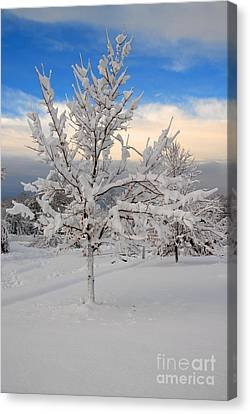 Ice Tree Canvas Print by Fred Cerbini
