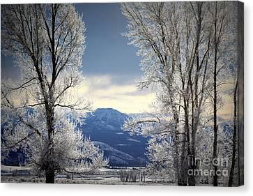 Ice Trees Canvas Print