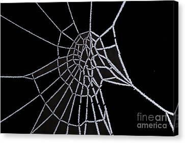 Ice Web Canvas Print by Carol Lynch