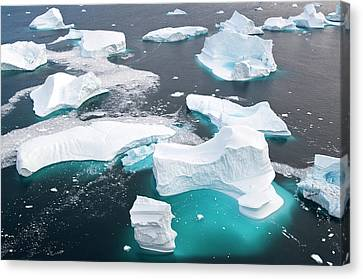 Icebergs, Cape York, Greenland Canvas Print by Daisy Gilardini
