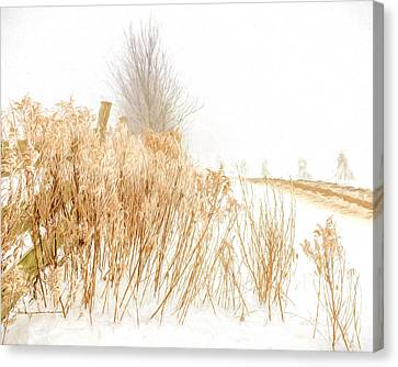 Iced Goldenrod At Fields Edge - Artistic Canvas Print
