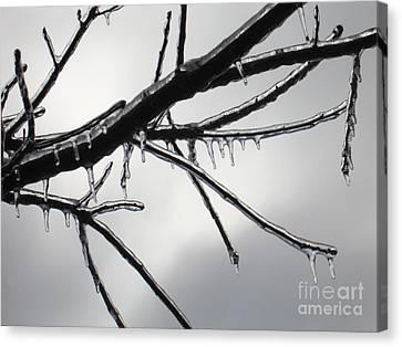 Iced Tree Canvas Print by Ann Horn