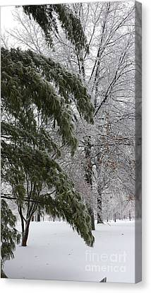 Iced Trees Canvas Print