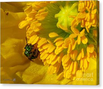 Canvas Print featuring the photograph Iceland Poppy Pollination by J McCombie