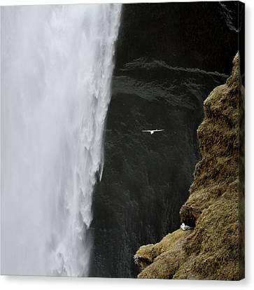 Iceland Seagull Flies Past Skogafoss Canvas Print