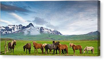 Icelandic Horses In Mountain Landscape In Iceland Canvas Print