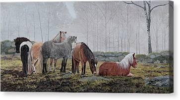 Icelandic Horses Canvas Print by Troels Kirk