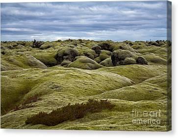 Icelandic Moss Canvas Print by Miso Jovicic