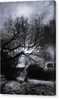 Ichabod's Pathway Canvas Print by Donna Blackhall