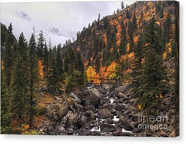 Icicle Creek Radiance Canvas Print by Mark Kiver