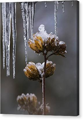 Icicles And Ice Flowers Canvas Print by Angie Vogel