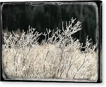 Icy Fingers Canvas Print by Janice Rae Pariza