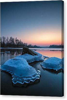 Icy Jellyfish Canvas Print by Davorin Mance