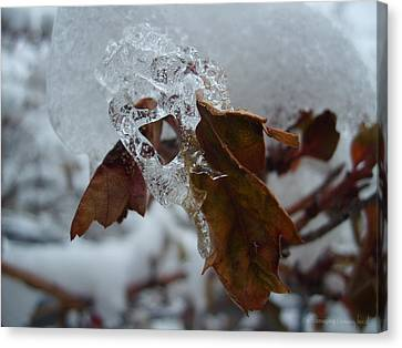 Icy Leaf Canvas Print by Tammy Beard