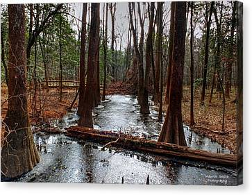 Icy River In The Bottomland Forest Canvas Print