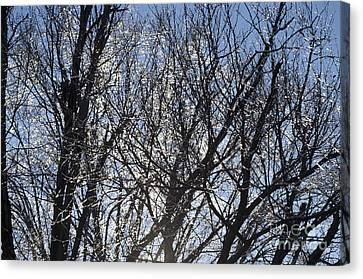 Icy Trees  Canvas Print by Luther   Fine Art