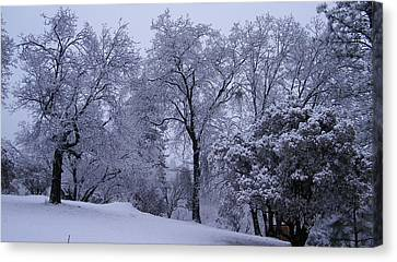 Icy Trees Canvas Print by Tom Mansfield