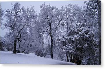 Icy Trees Canvas Print