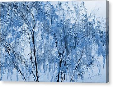 Icy Winter Canvas Print by Kume Bryant