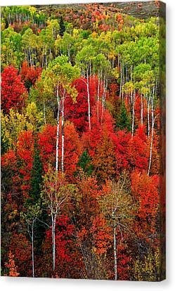 Idaho Autumn Canvas Print by Greg Norrell