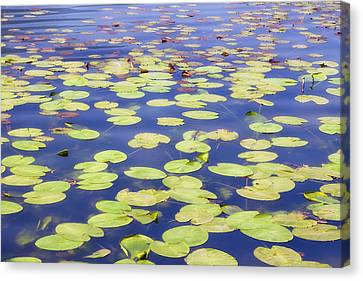 Lotus Leaves Canvas Print - Idyllic Pond by Joana Kruse