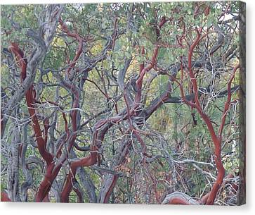 Idyllwild Red Tree Canvas Print