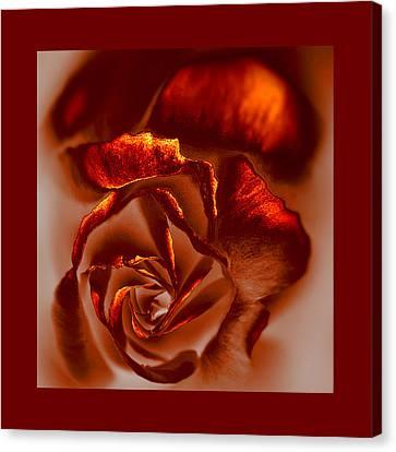 If A Rose Is A Rose Canvas Print by Li   van Saathoff