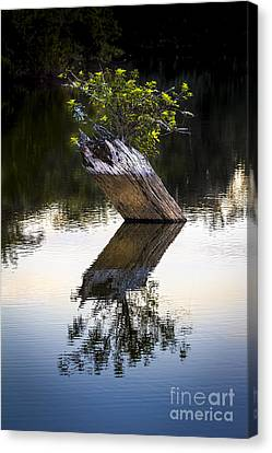 If There Is A Will There Is A Way Canvas Print by Marvin Spates