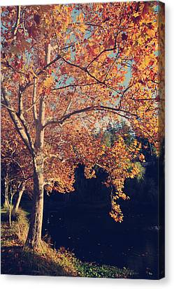 If Wishes Were Trees Canvas Print by Laurie Search