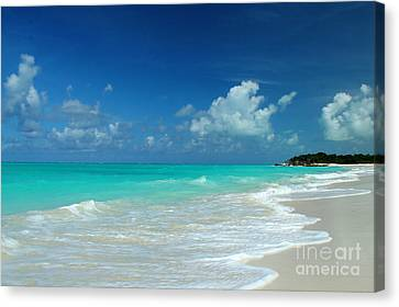 Iguana Island Caribbean Canvas Print