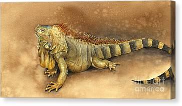 Iguana Canvas Print by Nan Wright